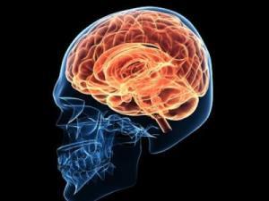 Los placeres como resultado de activacion de redes neuronales