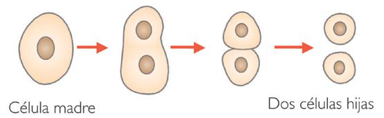 reproduccioncelular
